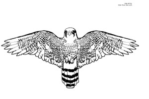 34639-peregrine-falcon-coloring-page
