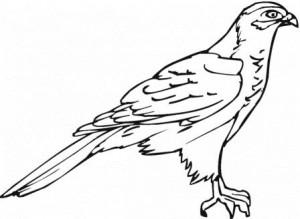 falcon-20-coloring-page
