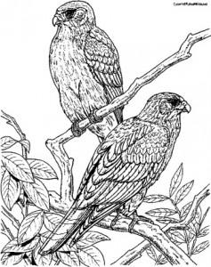 falcons101