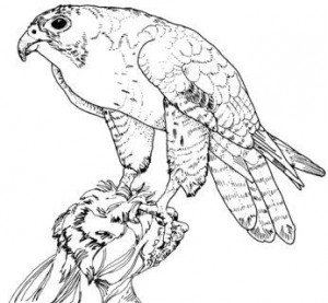 texas-peregrine-falcon-bird-coloring-pages